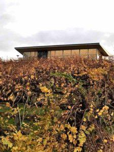 iron Hub Vineyard View