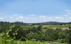 Iron Hub Winery Vineyard View