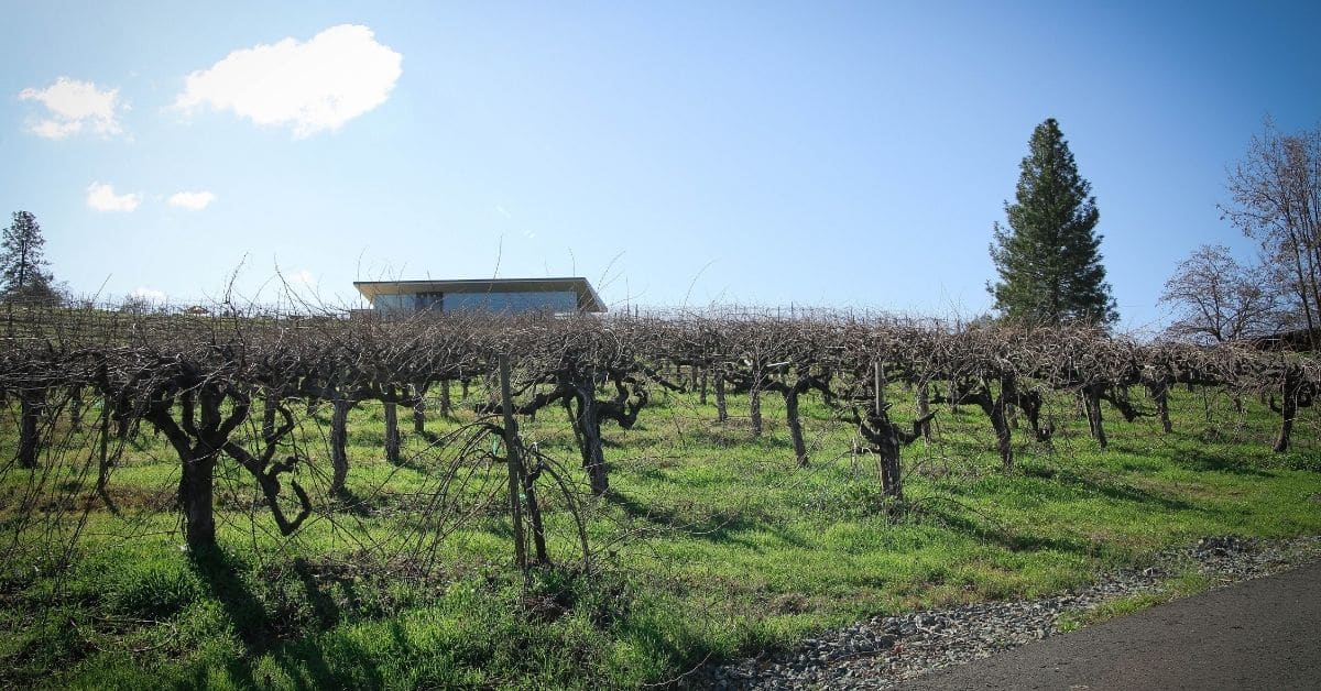 winter vineyard view